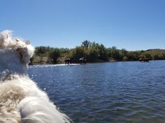 Holly checking out the horses Kayaking the Salt River October 24, 2017