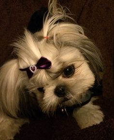 My Trixie Dixie