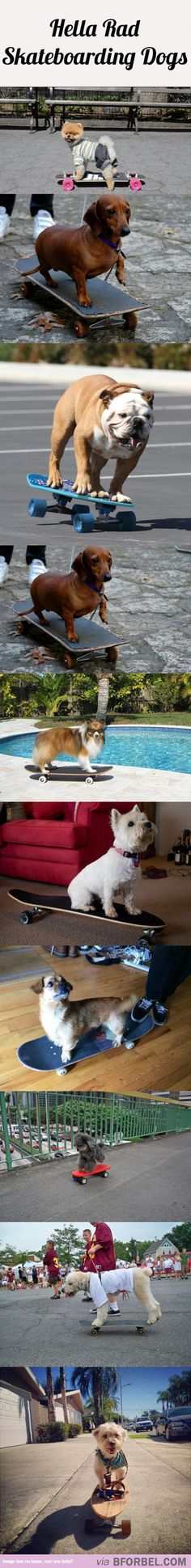 10 Rad Skateboarding Dogs…