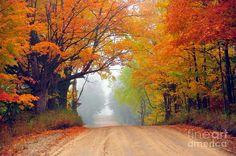 Autumn Luminaire Photograph by Terri Gostola in  FineArt America-
