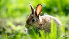 Cute Rabbit Wallpaper. - Meshlo