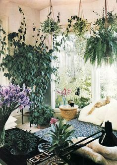 Hanging plants make this indoor garden feel cozy! and lush. Plants everywhere in the living room! Bohemian House, Bohemian Decor, Boho Chic, Bohemian Interior, Bohemian Style, Bohemian Living, Hanging Plants, Indoor Plants, Hanging Baskets
