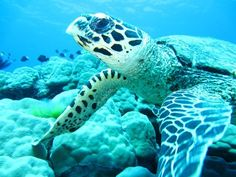 One of our contributor has met a #local at the #greatbarrierreef #queensland #autralia . focus depart is a #travel #social #network where can find #places #restaurant #accommodation #activities #events #walks and much more. #love #wildlife by focusdepart http://ift.tt/1UokkV2