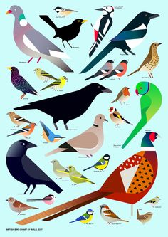 British Bird Chart by Build, 2014 – (by)Build Shop — Modern graphic design prints and products by Build London Bird Graphic, Graphic Design Print, Modern Graphic Design, Graphic Art, Vogel Illustration, Gravure Illustration, Bird Poster, Print Poster, Bird Quilt