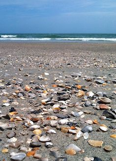 Sea Shells in the sand! It's fun to collect shells during your Myrtle Beach vacation!