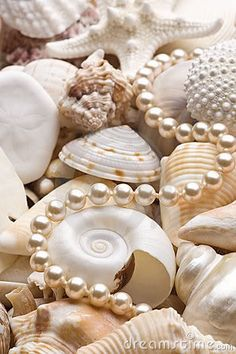 Pearls And Sea Shells : beautiful set for your bathroom deco! Bijou Rose Gold, Do It Yourself Decoration, Vintage Accessoires, Pearl And Lace, Background For Photography, Starfish, Seashell Art, Oysters, Sea Shells