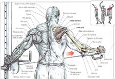 Image result for cable rear delt fly