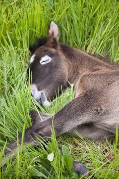 Cheval de Camargue, France