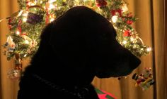Christmas Mike | Flickr - Photo Sharing!