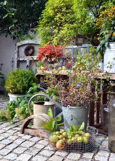 Courtyard DIY in autumn and a cornucopia of nature in the courtyard - Hof Hydrangea Seeds, Hydrangea Care, Citrus Garden, Vegetable Garden, Back Gardens, Small Gardens, Garden Equipment, Plant Drawing, Garden Trellis