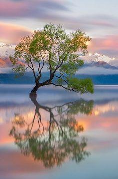 "Life on Earth on Twitter: ""Lake Wanaka, New Zealand https://t.co/zTQFd0pYcS"""