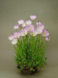Bonsai Accent Plant 129