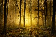 Mystic Forrest