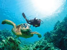 Pin 8. Something from my bucket list: Scuba Diving with Sea Turtles #bareMinerals #READYtowin