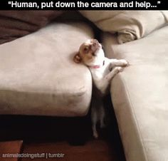 This dog who got stuck in the couch and now has to deal with humans and their cameras. | 31 Dogs Who Failed So Hard They Won