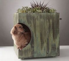 Stylish eco homes for dogs with 'rooftop gardens' now trending (via busydoor). How lovely!