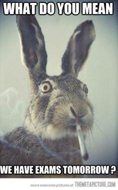 Unaware rabbit
