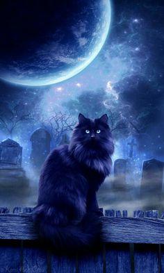 gatto al cimitero