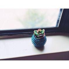 He encontrado este interesante anuncio de Etsy en https://www.etsy.com/es/listing/190113290/succulent-planter-small-planter-blue