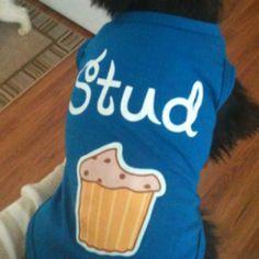 My little stud muffin, Zamp