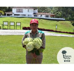 Anita feels very happy to start her week with #FloresdelEste. From #Colombia, we wish you a good day too!   #hydrangeas #ourteam #MondayVibes