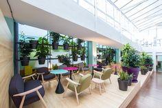 Green Office Creamos espacios de trabajo saludables Flores y plantas que se…