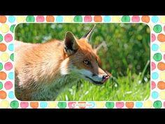 Fox, Teacher, Nursery, Youtube, Education, Health, Animals, Professor, Animales