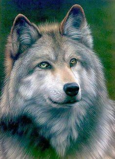 Beauté du loup