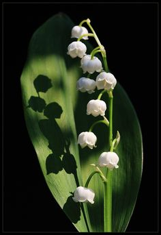 Flowers Garden Love - via: flowersgardenlove - Imgend