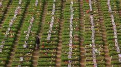 #موسوعة_اليمن_الإخبارية l الحوثيون يحولون اراضي الدولة الى مقابر جماعية لقتلاهم