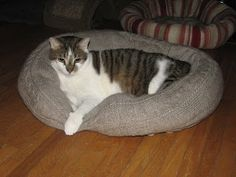 Love this idea! Old sweater into a cat bed. DIY