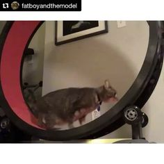 Baby steps. #cat #cats #catsofinstagram #onefastcat #catstagram  Check out the One Fast Cat Exercise Wheel at: www.onefastcat.com