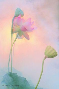 Flower | Flickr: partage de photos!