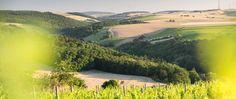 Weinanbaugebiet in Rheinhessen