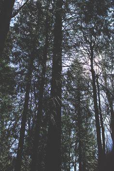 Combe woods  Instagram : @Jade_king_art