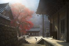 The Fragrance of a Thousand years - Early morning temple deep in the mountains there. temple treasure one thousand years Hwaeomsa(Temple) beautiful Red plum. I take the colors and fragrance of plum