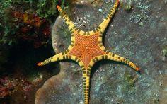 starfish!