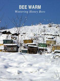 Bee Warm: Wintering Honey Bees | Herbal Academy of New England