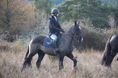 Joey hunting with the Grallagh Harriers. Video: https://www.facebook.com/CoopersHillEquine/videos/1212025888844579/ #loveirishhorses