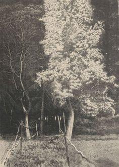 Kwitnąca grusza Małgorzatka - Leon Wyczółkowski