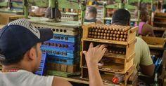 Um funcionário seleciona charutos na fábrica H. Upmann, em Havana