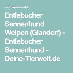 Entlebucher Sennenhund Welpen (Glandorf) - Entlebucher Sennenhund - Deine-Tierwelt.de Pet Dogs, Bremen, Lawn And Garden