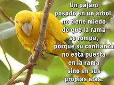 Un pájaro....