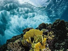 Coral Reef, Photograph by Thomas P. Peschak, National Geographic