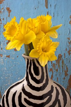Daffodils In Wide Striped Vase Photograph by Garry Gay