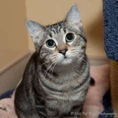 """Minuet"" - has been adopted!"