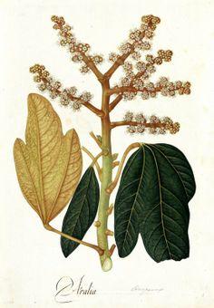 Expedicion botanica jose celestino mutis yahoo dating