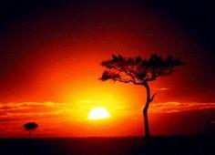サバンナの夕焼け。今、まさに太陽が沈もうとしています。  澄み切った空気の中の夕焼けの美しさは格別です。