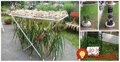 Nápady, ktoré v záhradke využije túto sezónu hádam každý, inšpirujte sa! Perfektný nápad na sušenie cesnaku a cibule Riešenie na odkvapy Spoľahlivo odvedie vodu do dostatočnej vzialenosti od vášho domu. Keď voda netečiš, jednoducho sa zroluje Nekupujte chladiace boxy Stačí Home Vegetable Garden, Gardening Tips, Ladder Decor, Ale, Projects To Try, Hacks, Plants, Outdoors, Design