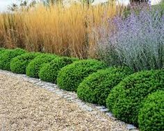Znalezione obrazy dla zapytania ornamental grass border